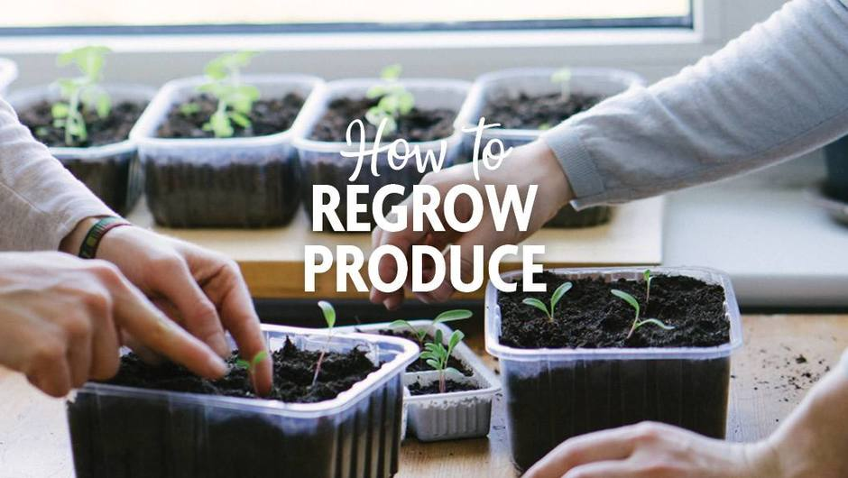 How to Regrow Produce from Leftover Veggies image